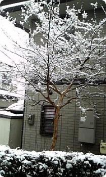 100218yuki.jpg